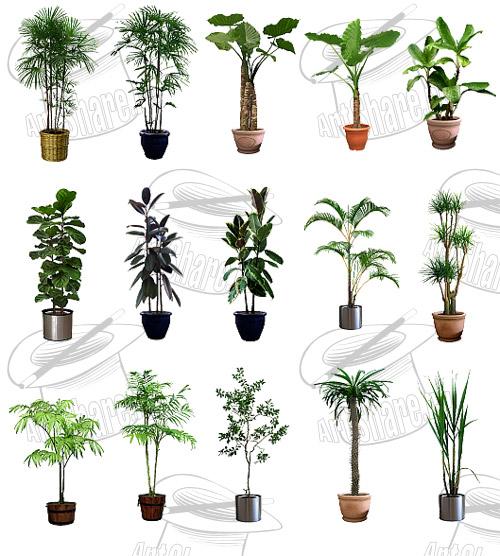 Клипарт комнатных растений