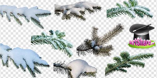 Png ветки елки со снегом
